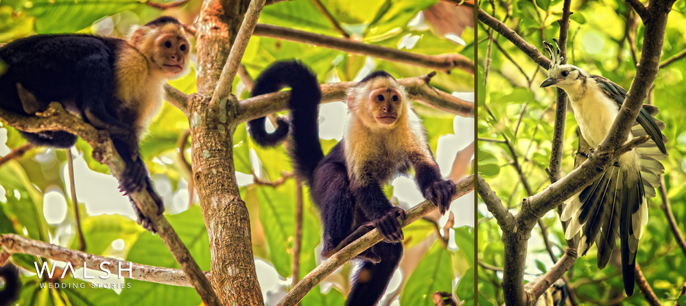dreams las mareas costa rica wedding photographer - local wildlife monkeys and birds at resort